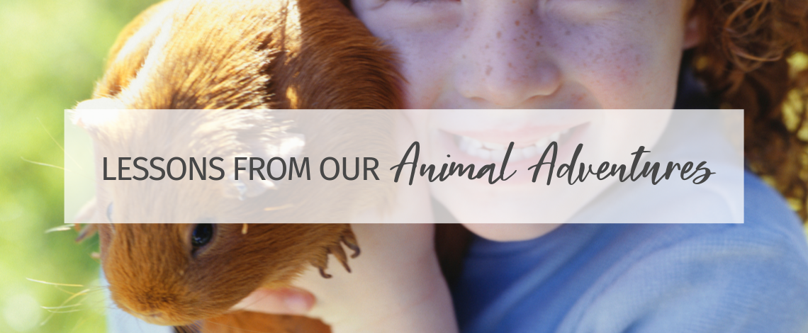 Lessons From Our Animal Adventures